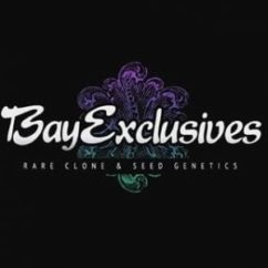 Bay Exclusives