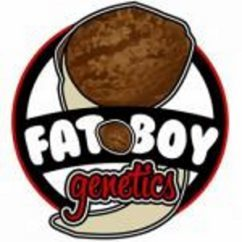Fat Boy Genetics